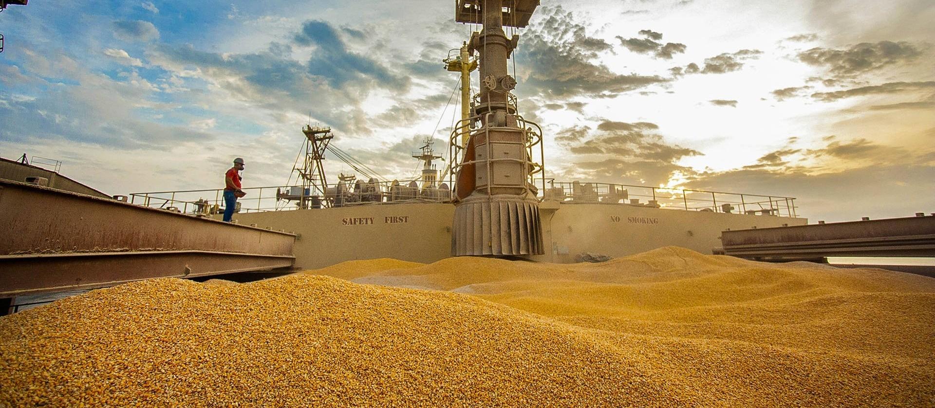 Brasil exporta 60 mil toneladas de milho para os EUA