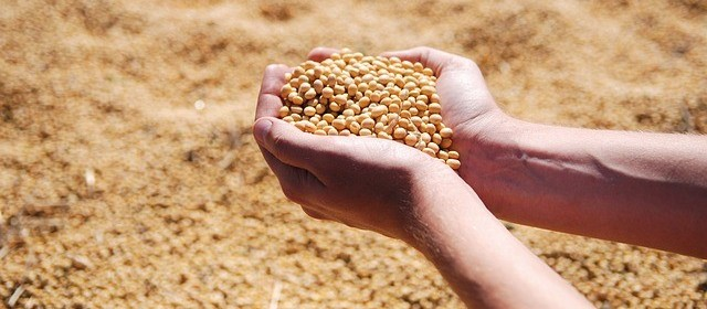 Começa a colheita da soja no Paraná