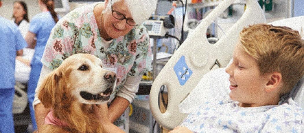 Projeto que permite entrada de animais domésticos em hospitais volta à pauta