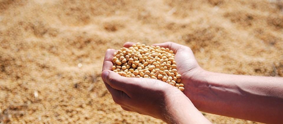 Soja custa R$ 73 em Maringá