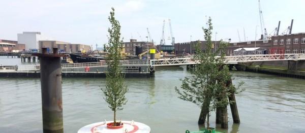 Florestas flutuantes permitem desenvolvimento sustentável