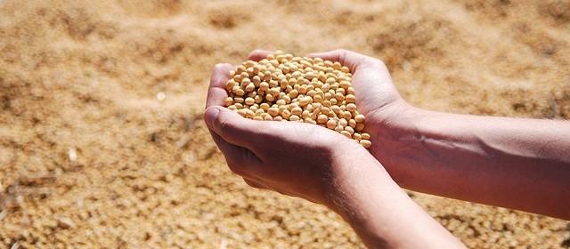 Embrapa lança livro sobre soja orgânica