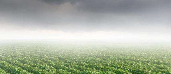 Previsão de semana chuvosa anima agricultores do Paraná