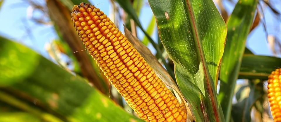 Preços da soja e milho beneficiam produtores