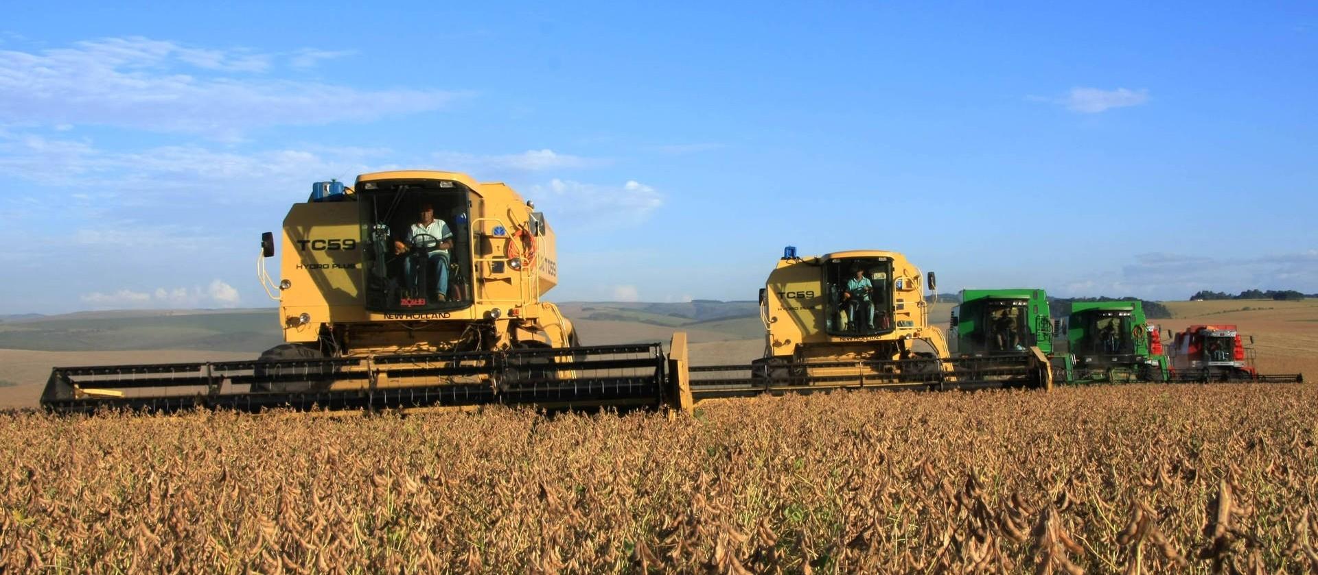 Queda de produtividade varia nas regiões Norte e Noroeste do Paraná