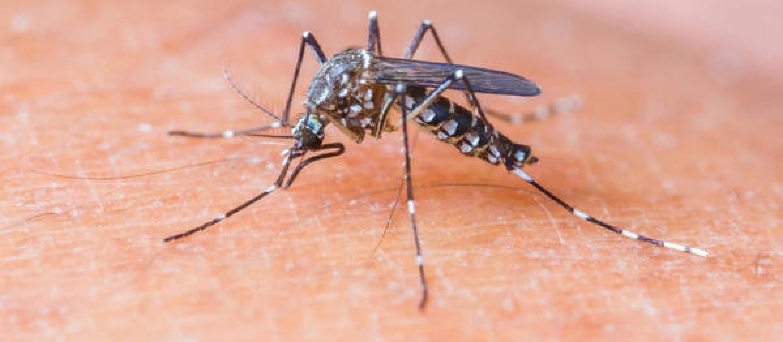 Maringá tem 11 casos de dengue positivos e 53 sob investigação