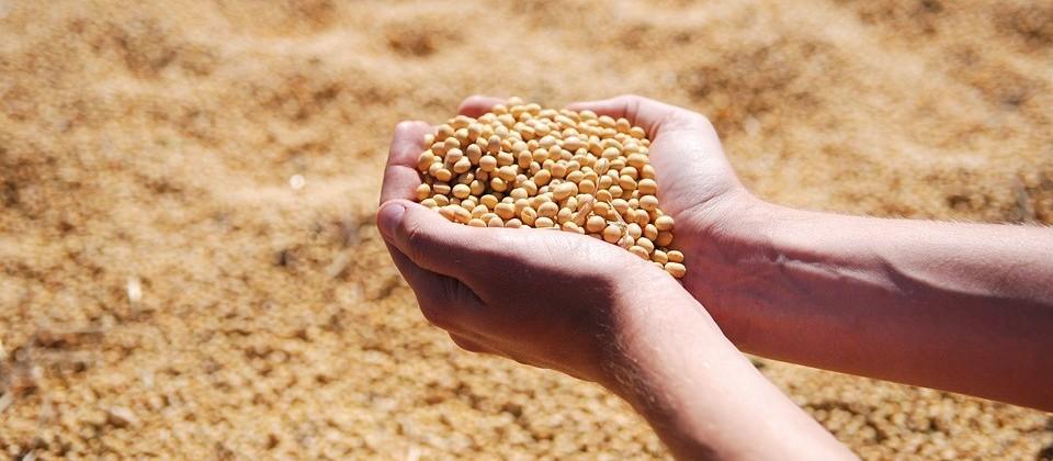 Soja custa R$ 68 a saca em Maringá