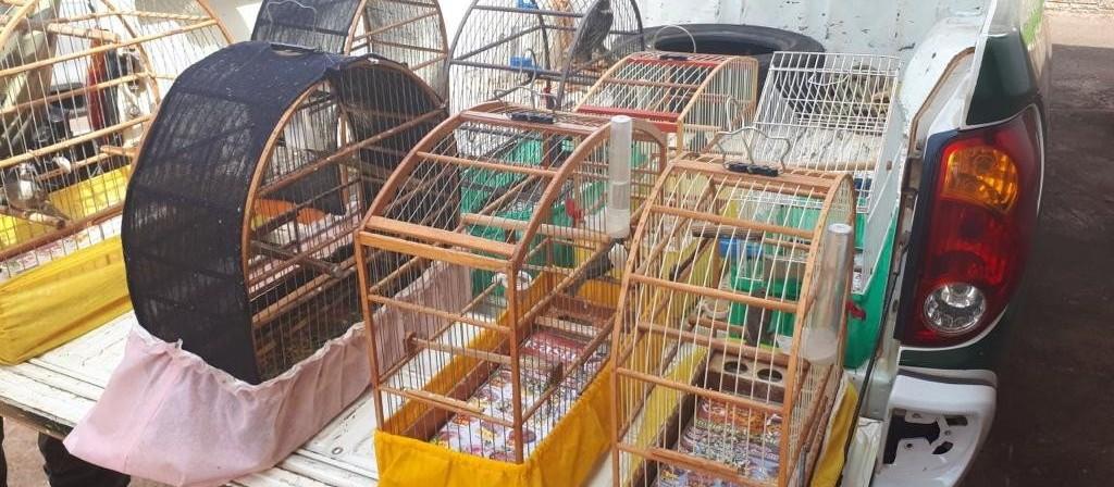 PMA apreende oito pássaros silvestres em cativeiro