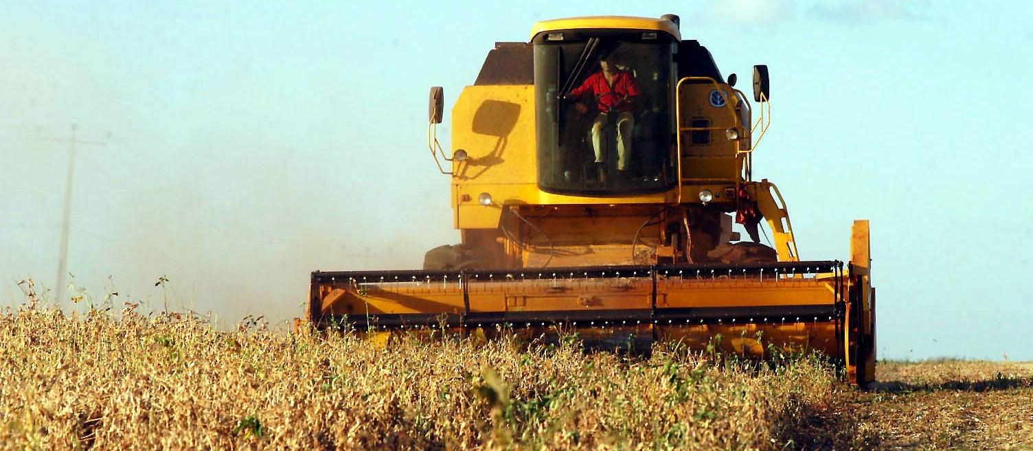 33% da soja do Paraná foi colhida; preços seguem em baixa