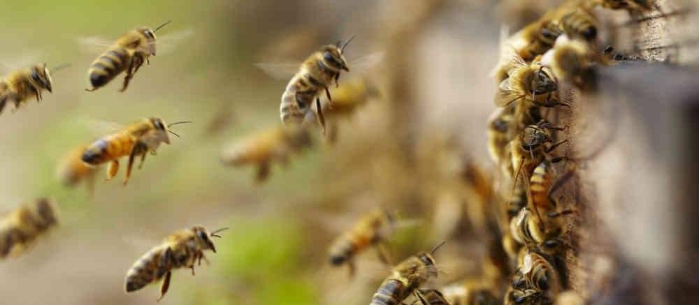 Idoso morre e mulher fica gravemente ferida após ataque de abelhas