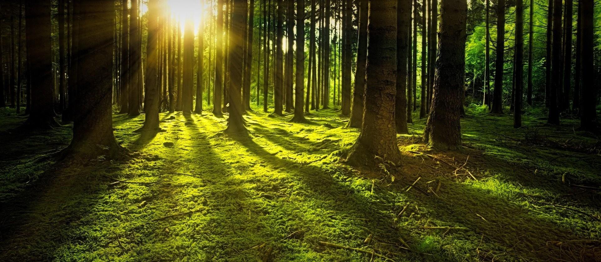 Brasil tem potencial para produção de hidrogênio verde