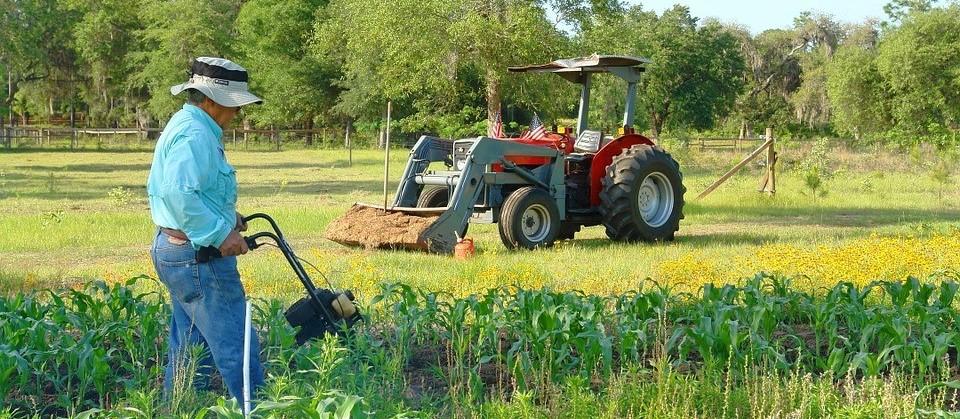 Dia do Agricultor: Agronegócio brasileiro se destaca nos pilares da economia nacional