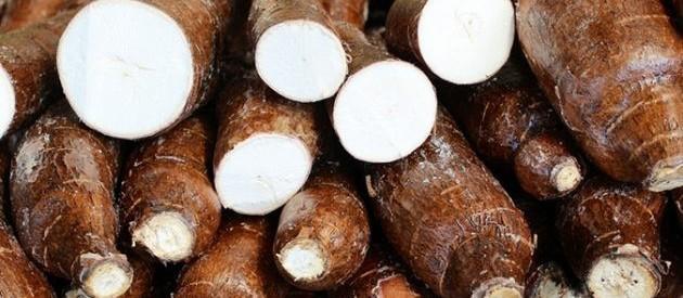 Raiz de mandioca custa R$ 310 a tonelada em Campo Mourão