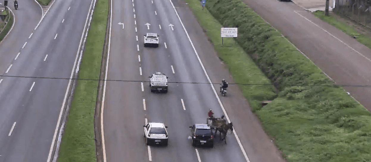 Carroça causa acidente ao trafegar na contramão; veja o vídeo