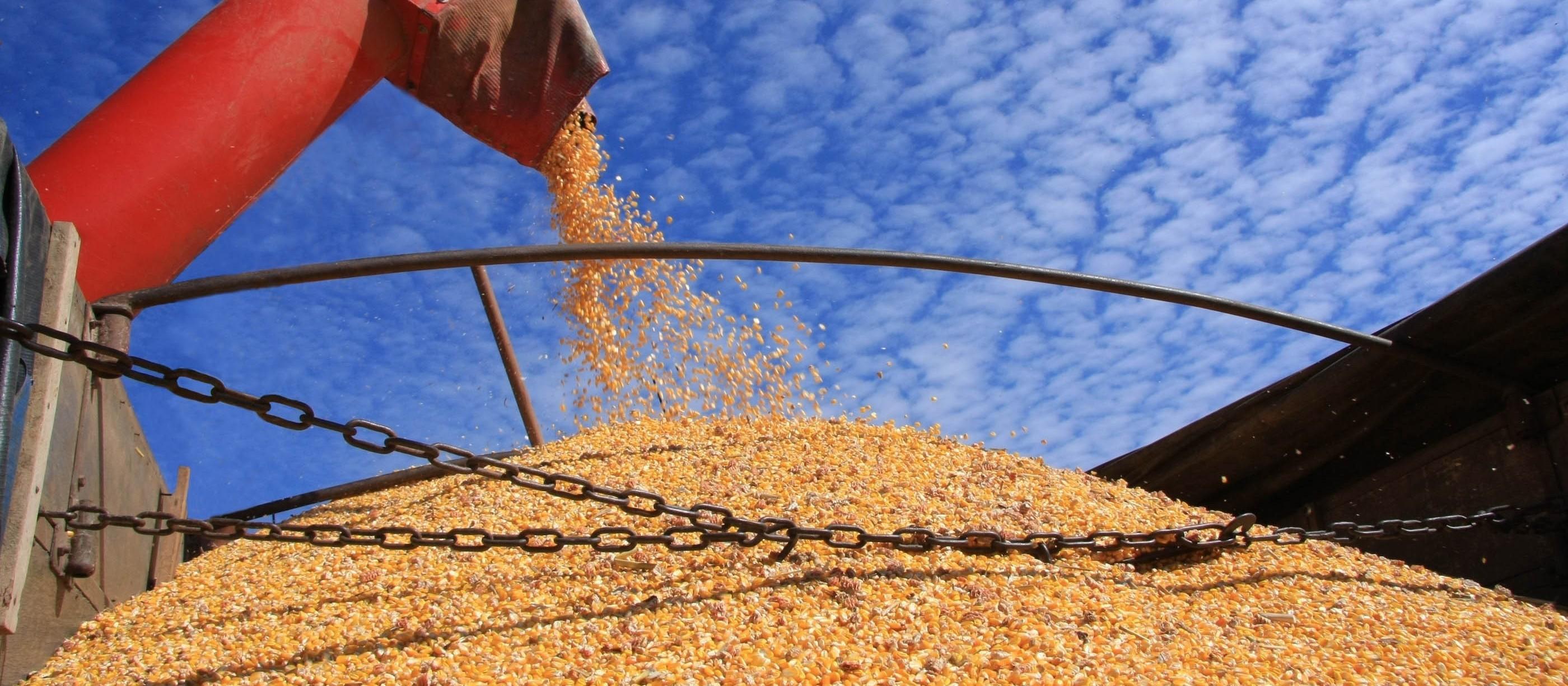 Produção de milho foi projetada em 53,3 toneladas