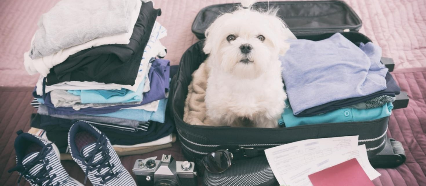 Dicas e prevenções para quando for levar seu animal para viajar