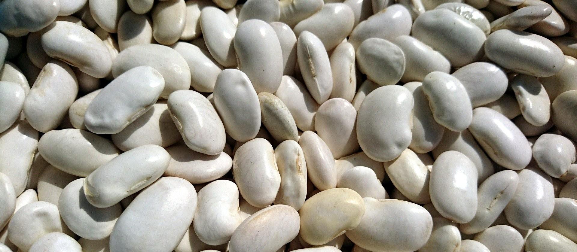 Publicado zoneamento agrícola de feijão primeira safra