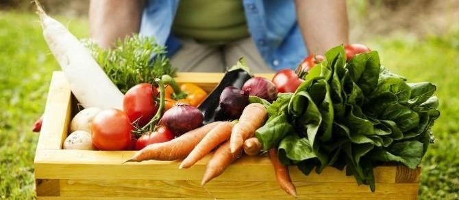 Quer aprender a manejar alimentos? Curso gratuito te ensina