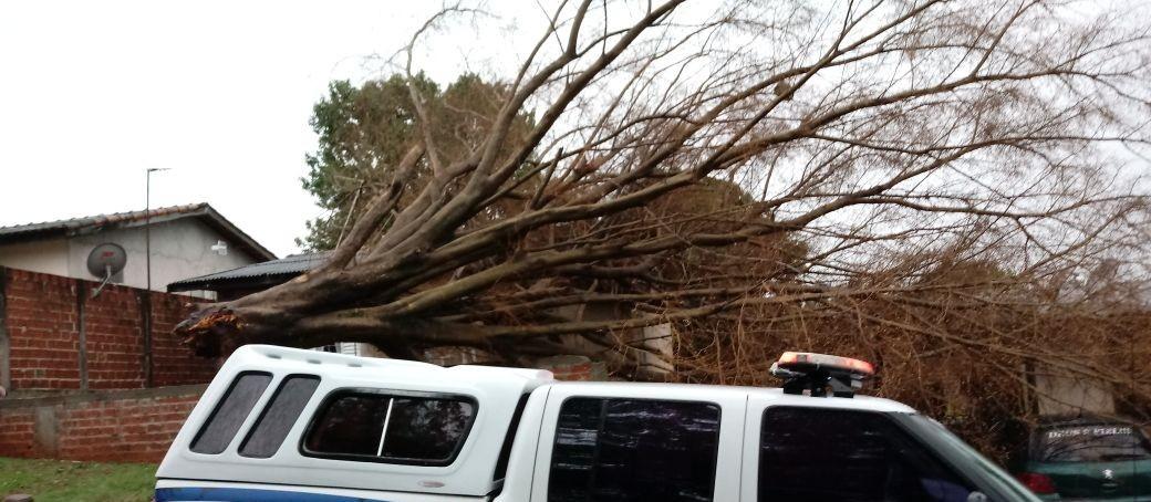 Chuva derruba árvores em Maringá