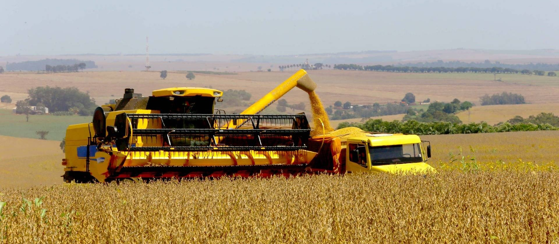 Safra de grãos de verão do Paraná deve ser 9% maior, estima Deral