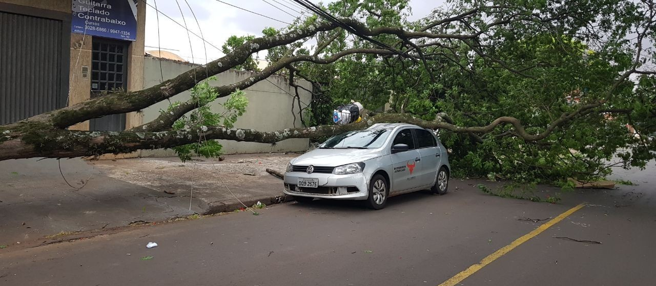 Chuva derruba 37 árvores em Maringá