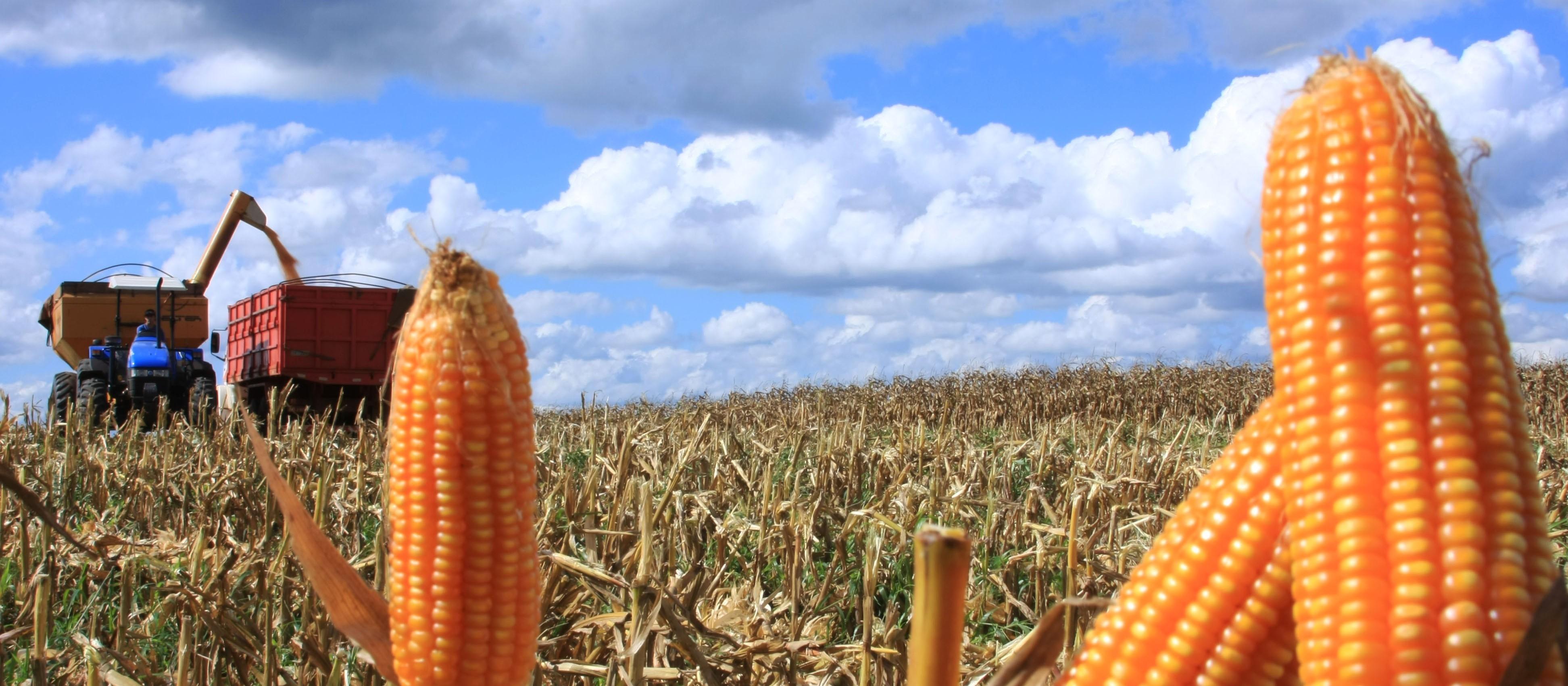 Fiscalização apreende sementes de milho híbrido no Oeste do Paraná