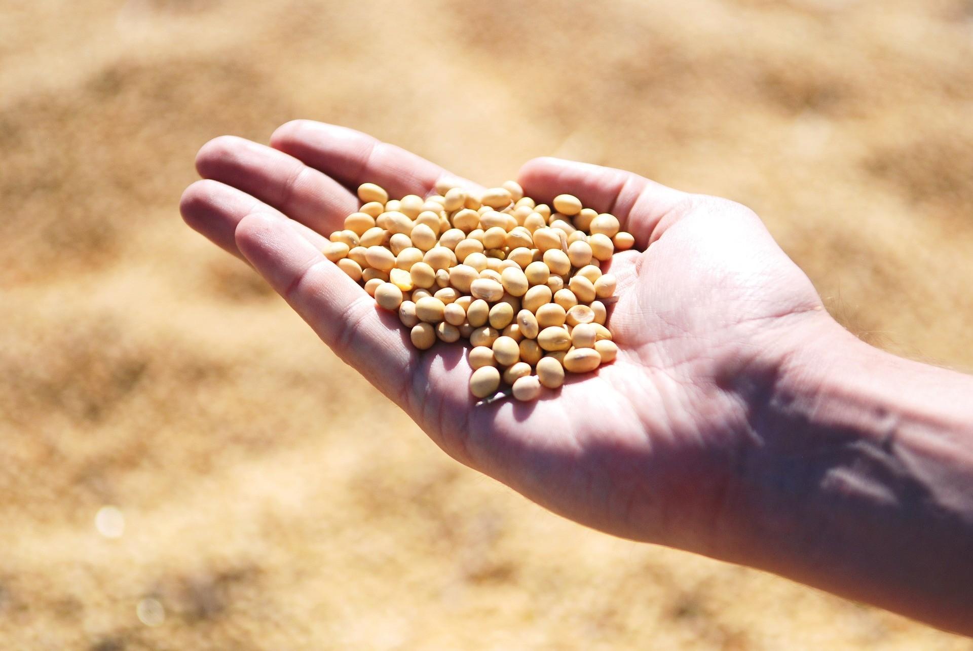 86% da soja da safra passada já foi comercializada