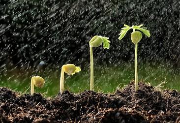Por conta das chuvas, safras de verão se desenvolvem no campo
