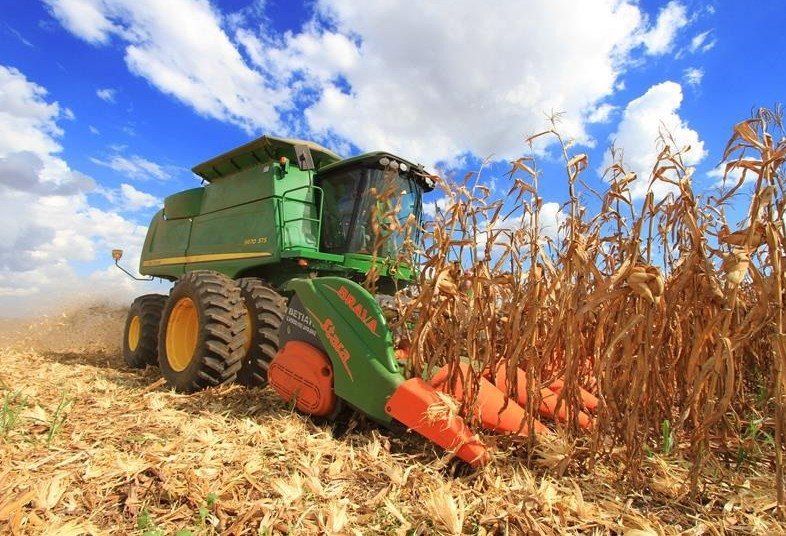 Colheita do milho de inverno atinge 65% no Paraná