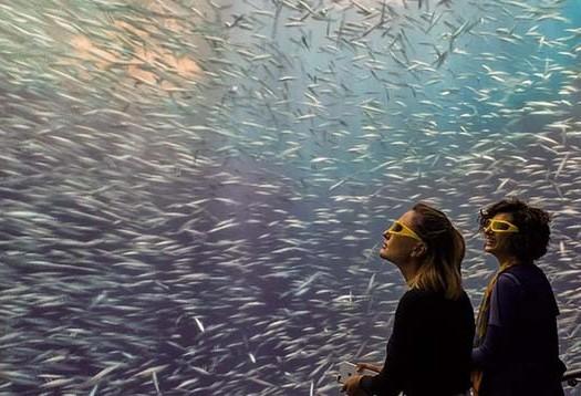 Museu mostra vida oceânica em 3D
