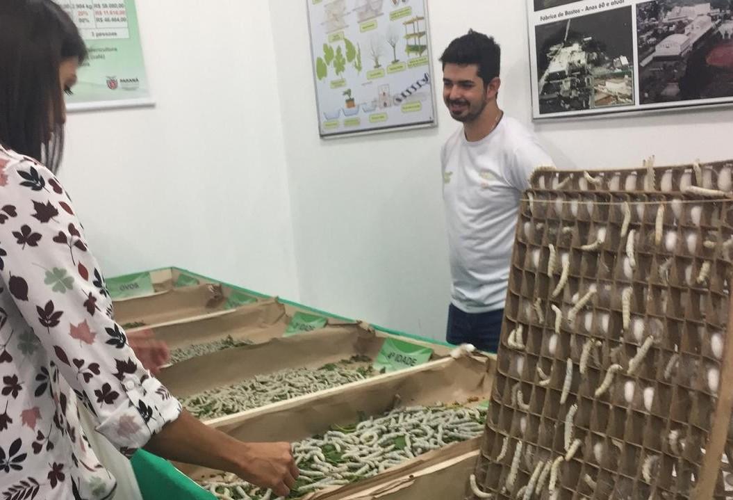 Visitantes da Expoingá podem conhecer todas os ciclos de vida do bicho-da-seda