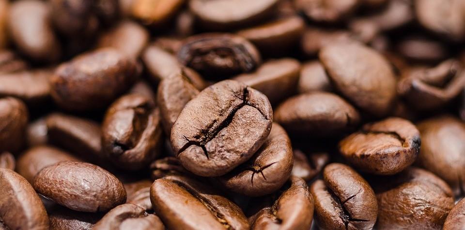 Preço faz produtor segurar a produção de café