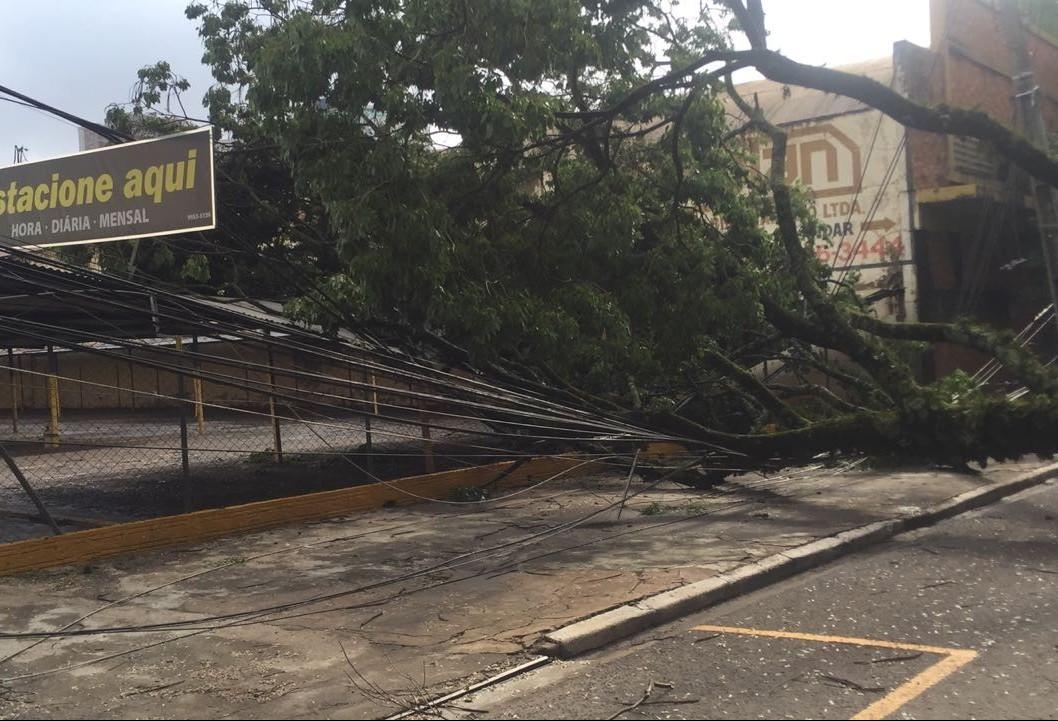 Árvore caída na Avenida Carneiro Leão deixa comércio e fábricas sem energia