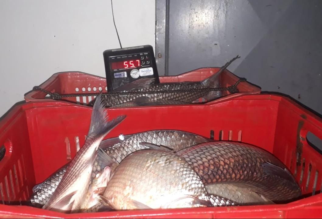 Homens são presos por pescar ilegalmente quase 120 kg de peixe no Rio Ivaí, diz polícia
