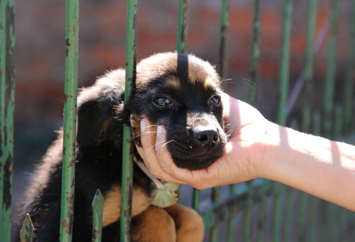 'Mutirão do Bem' vai orientar população e fazer cadastro para castração de animais