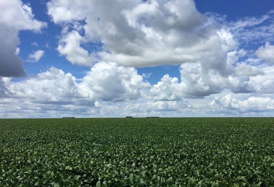 Problemas climáticos prejudicam safra 2018/19 da soja