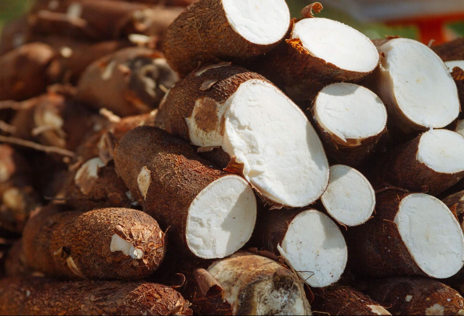 Tonelada da raiz de mandioca custa R$ 310 em Umuarama