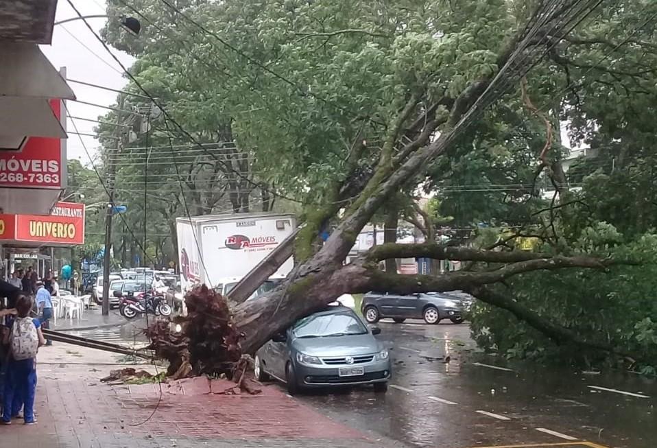 12 árvores caem em Maringá por conta da chuva