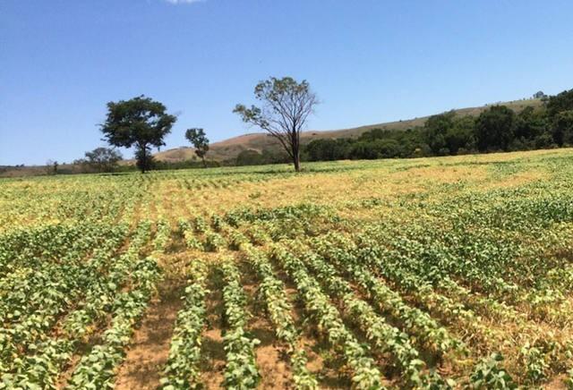 Em relação ao Brasil, soja argentina está atrasada