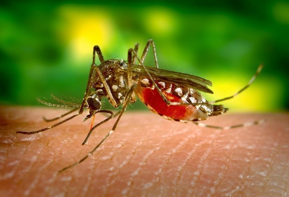 Maringá tem 143 casos confirmados de dengue