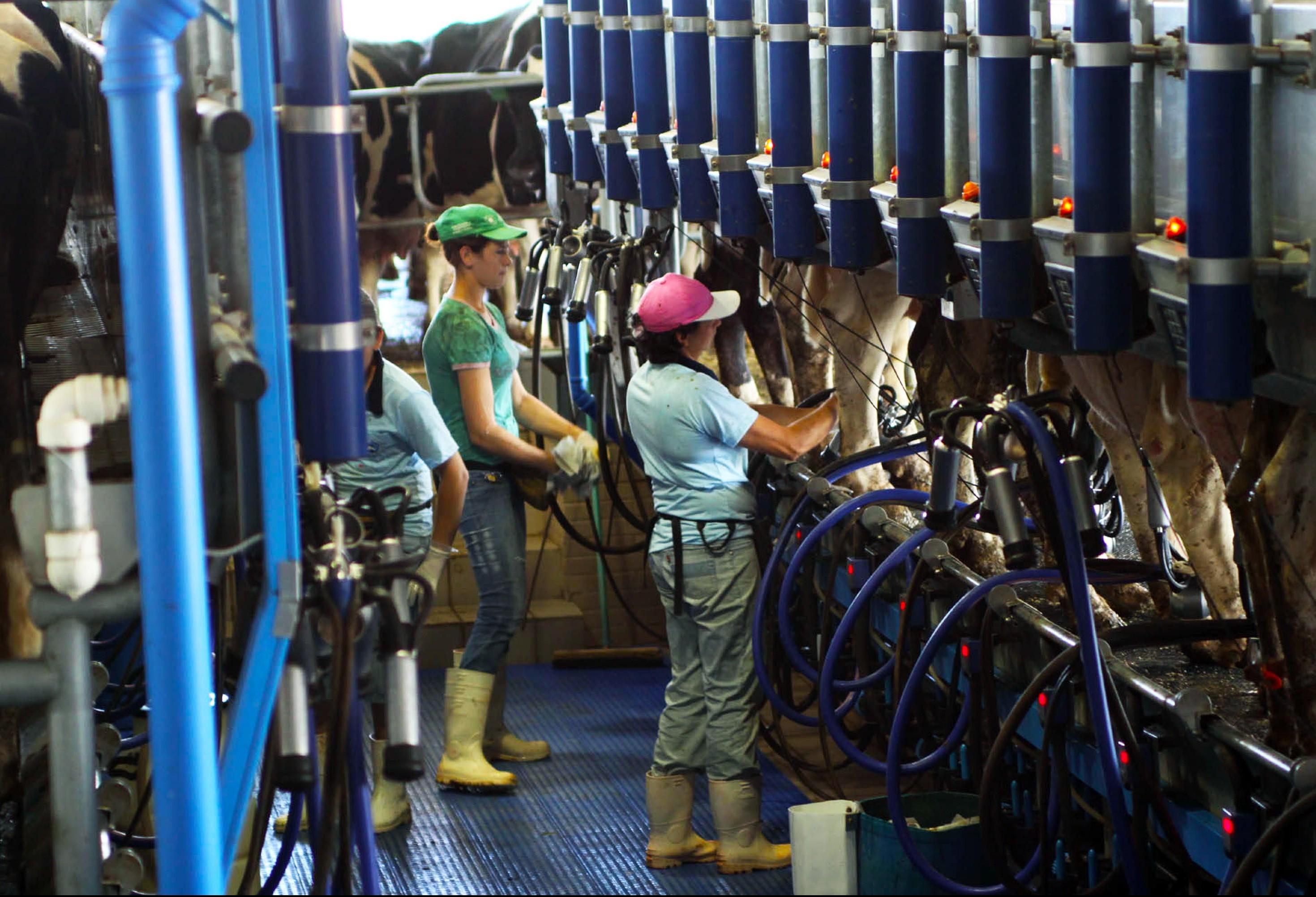 Estados do Sul do Brasil elevam produção de leite