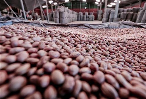 Safra de feijão teve quebra de 19% no Paraná