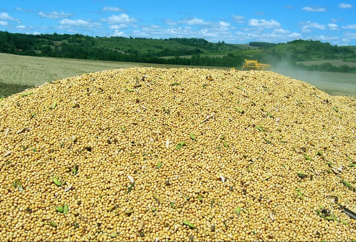 Saca da soja custa R$ 69,50 em Campo Mourão e Londrina