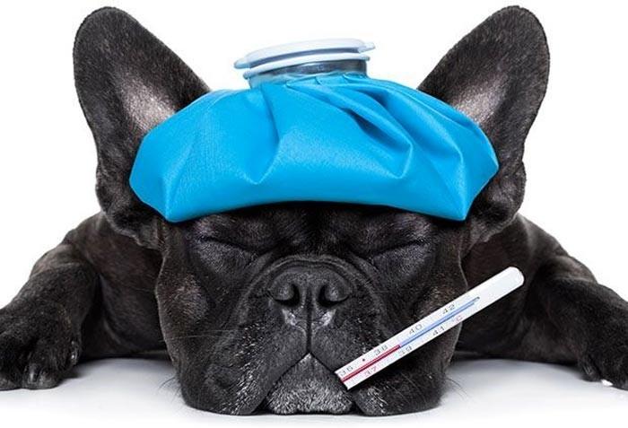 Saúde animal no inverno: doenças e precauções