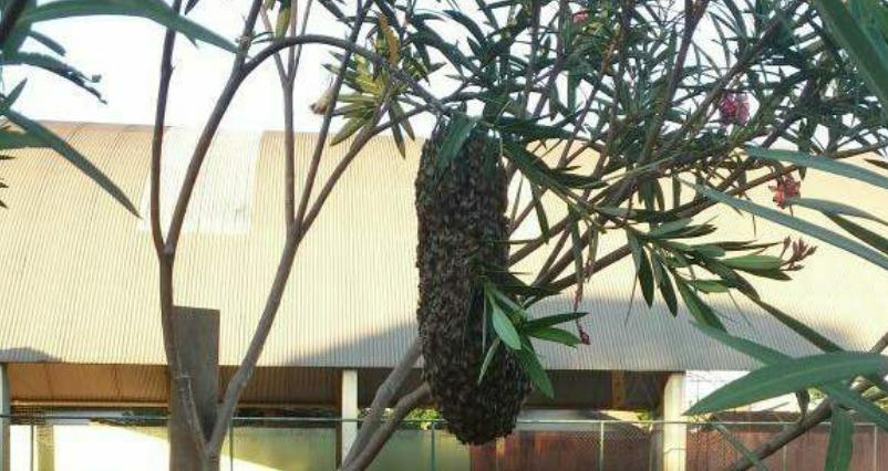 Enxame de abelhas leva à suspensão de aulas em colégio