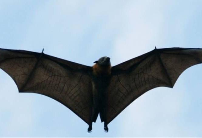 """Abertas as inscrições para """"A Noite dos Morcegos"""""""