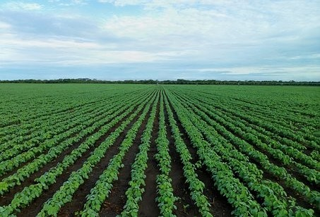 Dias chuvosos ajudaram produtores rurais do Paraná