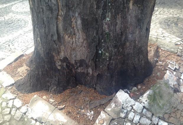 Morte rápida de cinco árvores em Umuarama vira caso de polícia