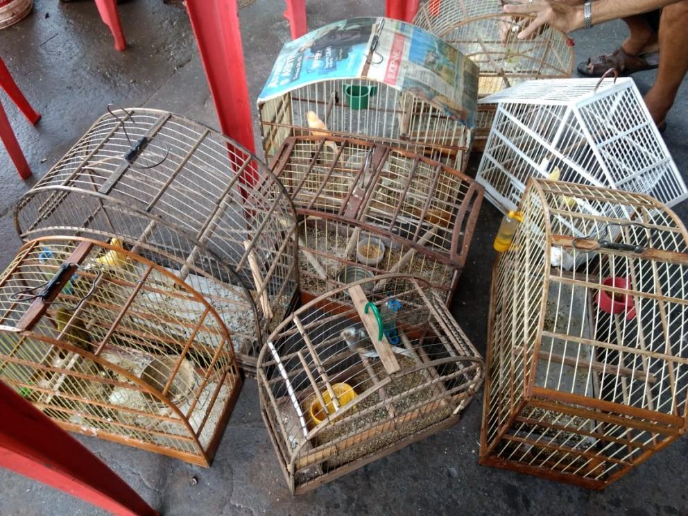 Homem é preso por maus tratos e posse ilegal de aves