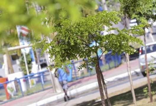 Salvador cria delivery de árvores